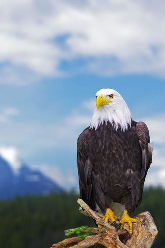 Eagles.  Majestic strength